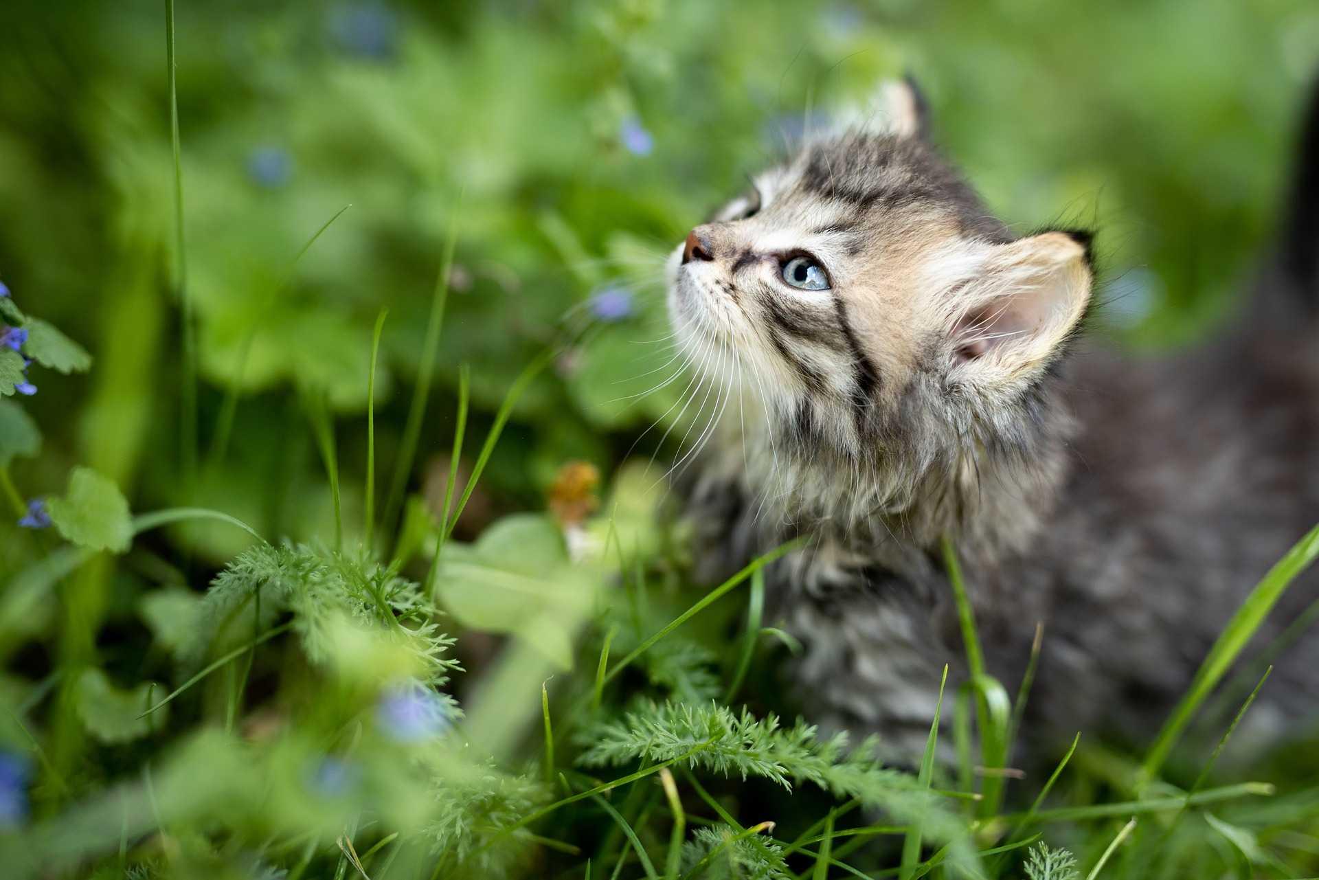 consejos-verano-gatos