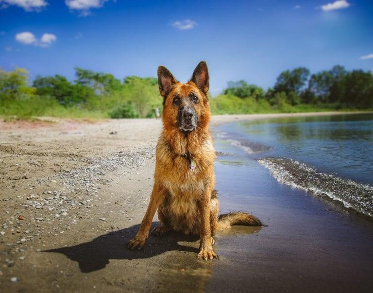 Perro vacaciones en campo y playa