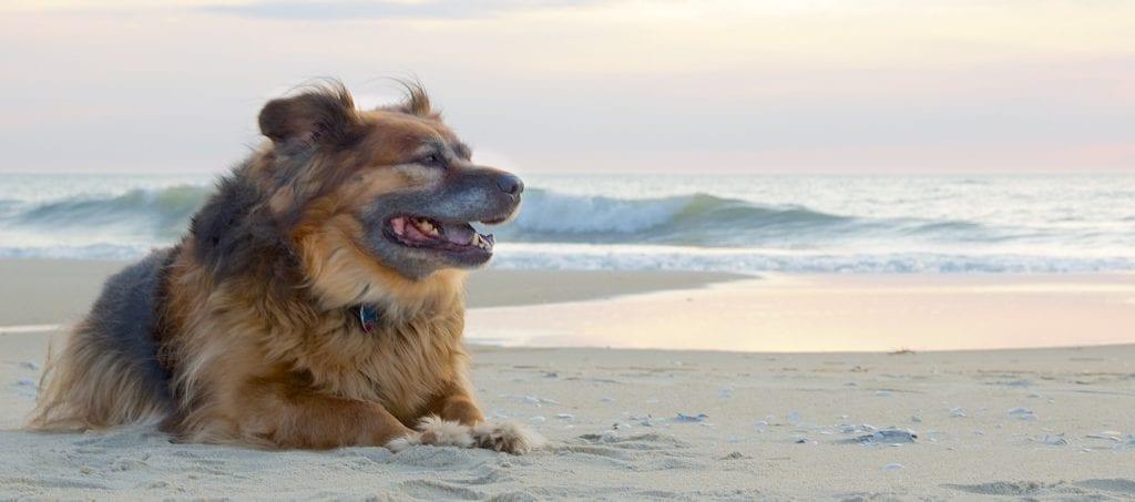 Gos estirat a la sorra de la platja