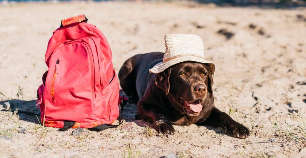 perro en la playa en verano