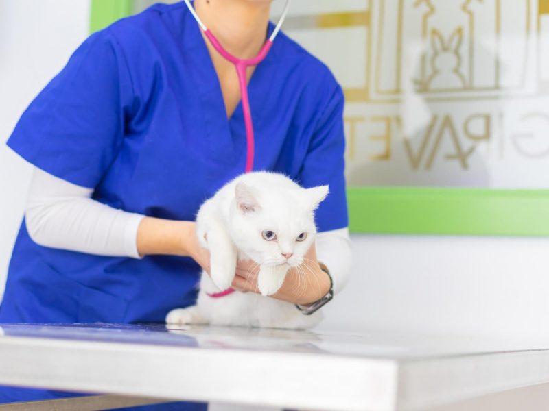 medicina-interna-vilafranca-giravet (1)