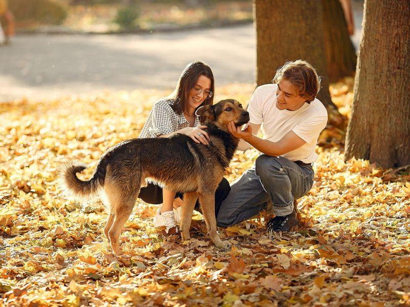 Plan salud perros basico