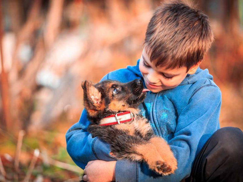 planes-de-salud-cachorros