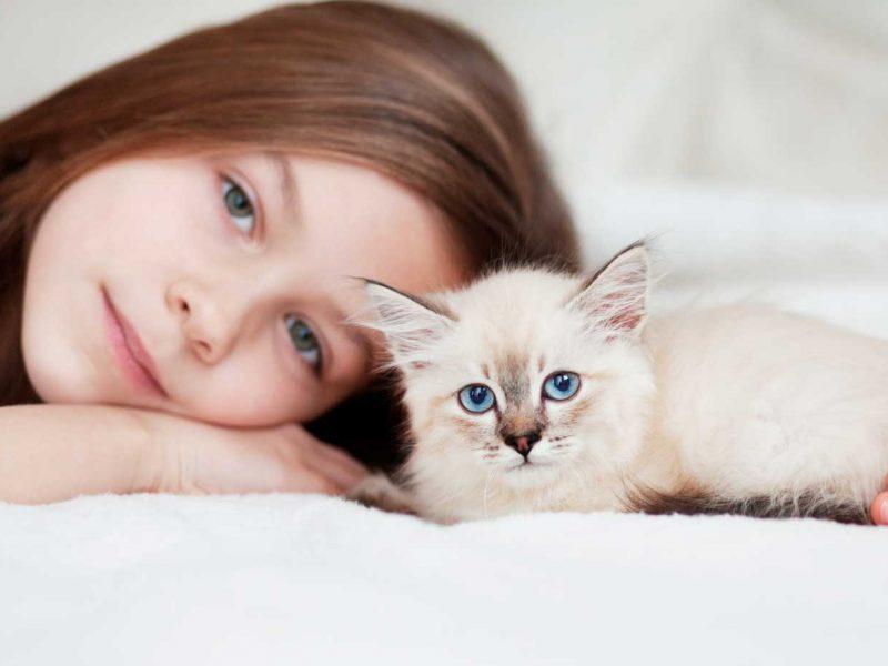 planes-de-salud-veterinarios-gatos-cachorro