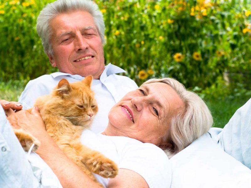 planes-de-salud-veterinarios-gatos-senior